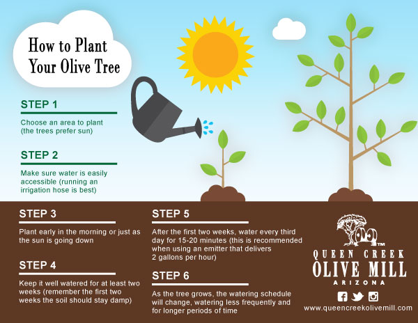 9 Divine Facts About Olive Trees