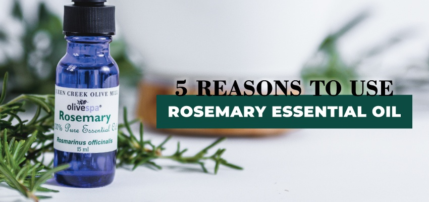 850x400-Header-Rosemary-Oil