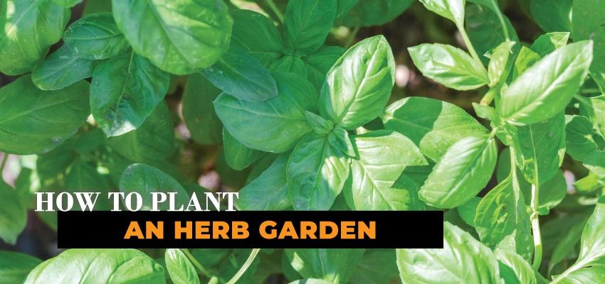 850x400-herb-garden